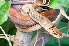 Free Snake Stock Image - 17069561