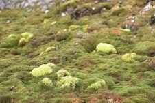 Green Arctic Tundra, Summer &x28;Svalbard&x29; Stock Image