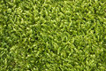 Free Moss Texture Stock Photo - 17076300