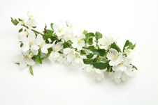 Free Blossoming Apple-tree Stock Photos - 17071043