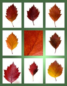 Free Autumn Leaves Collection Stock Photo - 17075020