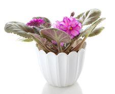 Free Pot Flowers Saintpaulia Flower Stock Photo - 17076090