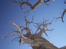 Free Dry Bones Royalty Free Stock Image - 17076606