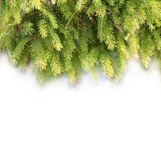 Free Pine Branches For Christmas Decorations Stock Photos - 17076983
