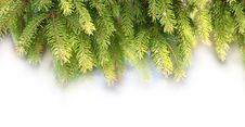 Free Decorations Of Pine Branches Stock Image - 17077661