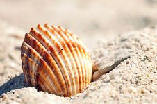 Free Shell Stock Photography - 17077702