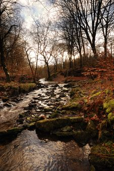 Free An Autumn Stream Stock Photos - 17077993