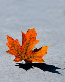 Free Fall Leaf Royalty Free Stock Photo - 17079005