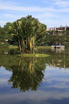 Free Palm Tree Reflection Stock Photo - 17080350