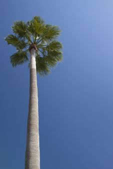 Free Lonely Palm Tree Stock Photo - 17080390