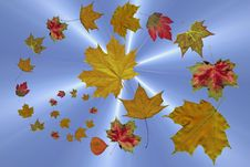 Free The Falling Autumn Leaves Royalty Free Stock Photos - 17081068