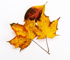 Free Yellow And Orange  Leaves Royalty Free Stock Photos - 17082628