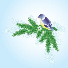 Free A Bird On A Branch Of Pine. Royalty Free Stock Photo - 17088505