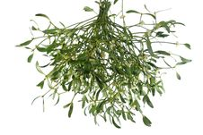 Mistletoe On White Background Stock Image