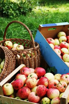 Free Apples In Boxes And Buskets. Stock Photography - 17089492