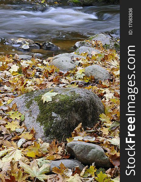 Wild river in autumn