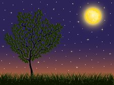 Free Night Background With A Tree Stock Image - 17090881