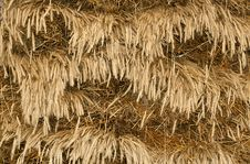 Free Texture Of Wheat Stock Photography - 17091392