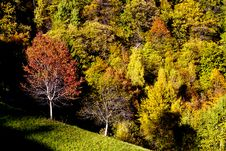 Free Autumn Forest Stock Images - 17092954