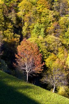 Free Autumn Forest Royalty Free Stock Photography - 17093097