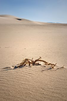 Free Branch In The Sand Stock Images - 17093564