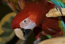 Free Macaw Parrot Stock Images - 17095244