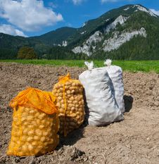 Free Harvested Potatoes Stock Image - 17095711