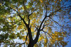 Free Fall Foliage Through Sunlight Near Sunrise Royalty Free Stock Image - 17097386