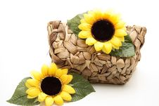 Sunflower Blossom Royalty Free Stock Photo