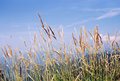 Free Waves Of Grain Stock Photography - 1713662