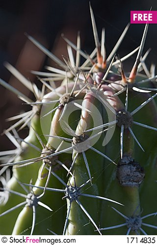 Free Cactus Macro Royalty Free Stock Photo - 1714835