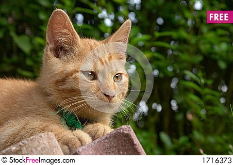 Red Haired cat Stock Photo