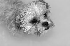 Free Wet Dog Stock Images - 1713964