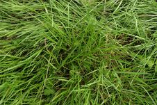 Free Grass Stock Image - 1714021
