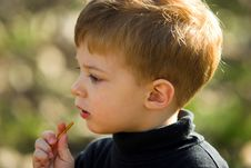 Free A Little Boy Eating Short Stick Royalty Free Stock Photos - 1714088