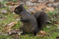 Free Squirrel Stock Images - 1714394
