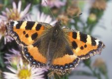 Free Butterfly Stock Image - 1714821