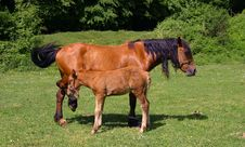 Free Horses On A Sunny Day Royalty Free Stock Photography - 1714877