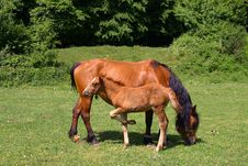 Free Horses On A Sunny Day Royalty Free Stock Images - 1714879