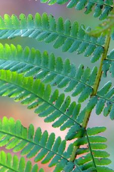Autumn Leaves On Fern  Twig Stock Photos