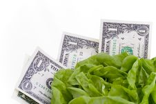 Dollars In Lettuce Stock Images