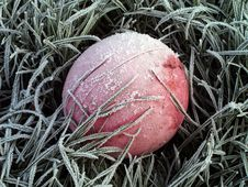 Free Frozen Ball Stock Photography - 1716182
