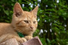 Free Red Haired Cat Stock Photos - 1716373