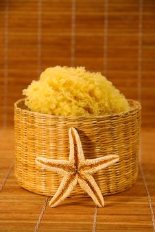 Free Sea Sponge And Starfish Stock Image - 1717151