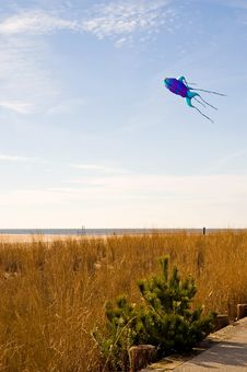 Free Kite Flying On The Beach-3 Royalty Free Stock Photo - 1717295