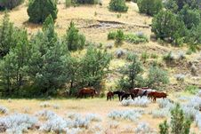 Free Horses Grazing Royalty Free Stock Image - 1717516