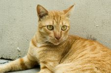 Free Singapore Stray Cat Royalty Free Stock Photos - 1717778