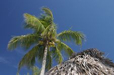 Free Hut And Coconut Palm Royalty Free Stock Photography - 1718877