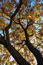 Free Autumn Tree Stock Photos - 17101823