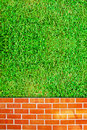 Free Brick Wall Fence And Grass Field Stock Image - 17105791